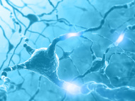 stock-photo-12166657-concept-of-brain-with-nervous-system-and-neuron